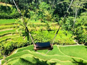 Bali Rice field swing