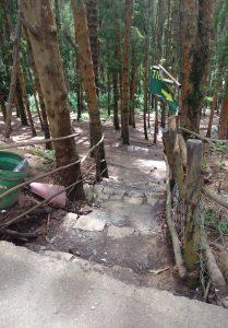 Pine Forest Entrance