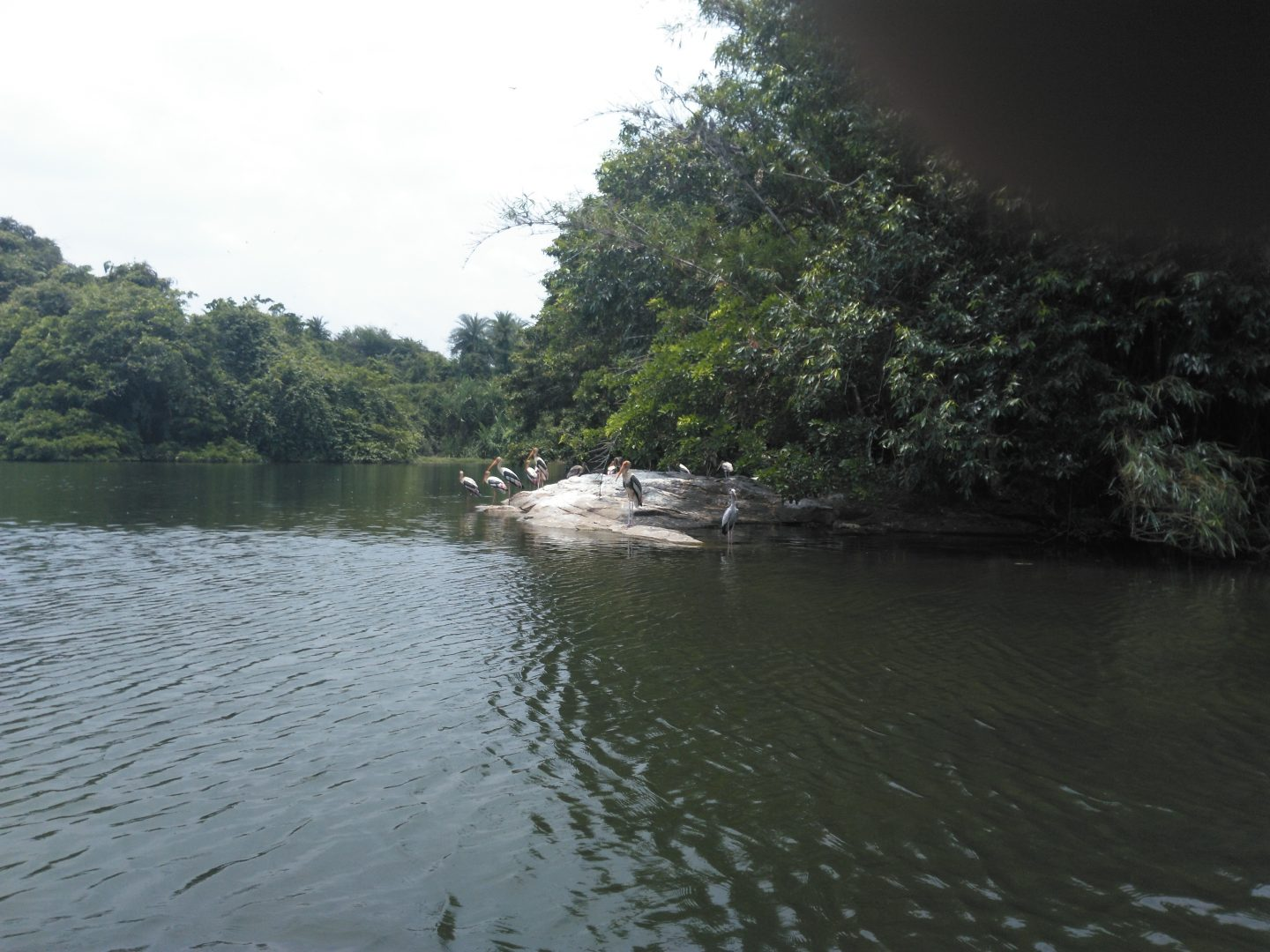 Ranganatitu Bird Sanctuary