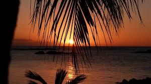 Mauritius Sunset Palm Trees